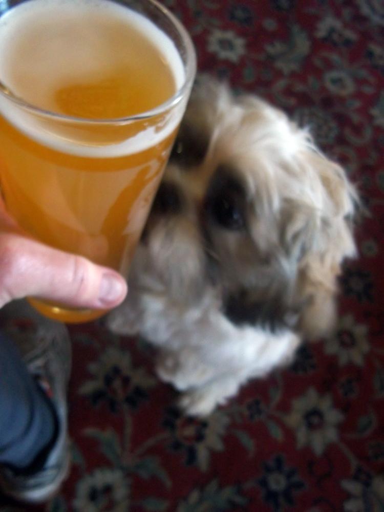 Happy Slapper and dog Ludlow Arms Westbury