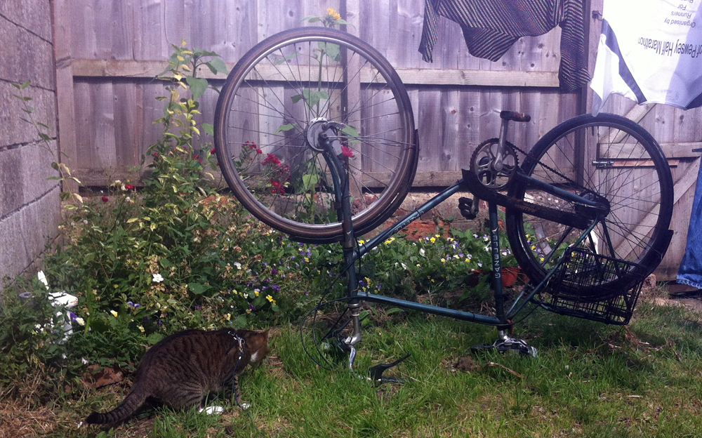 cat and fiets